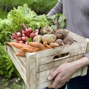 Uporaba preparata kremen iz roga za zdravje pridelkov